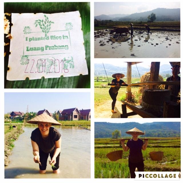 Mein Tag als Reisbauer