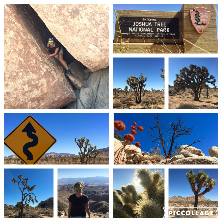 Joshua Trees and split rock - perfect photo shooting scenery
