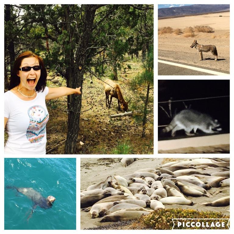 So viele Tiere - I like!